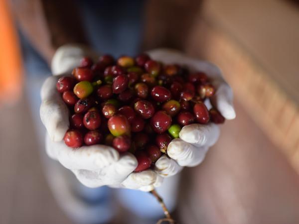 Precios altos de café y petróleo: por qué favorecería a Colombia | Finanzas | Economía