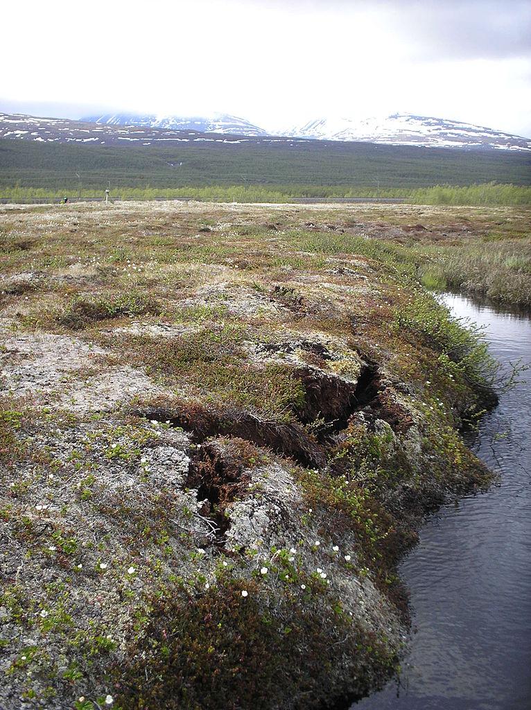 Rotíferos: sobrevivieron 24000 años congelados