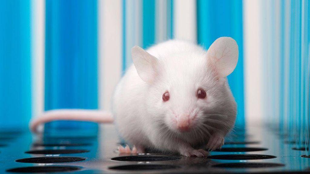 es posible para las células embrionarias