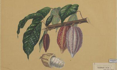 5 datos en el Día Mundial del Cacao