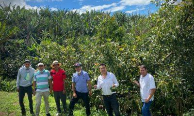 Apoyo al campo: certificarán predios para la exportación de aguacate hass a suelo internacional