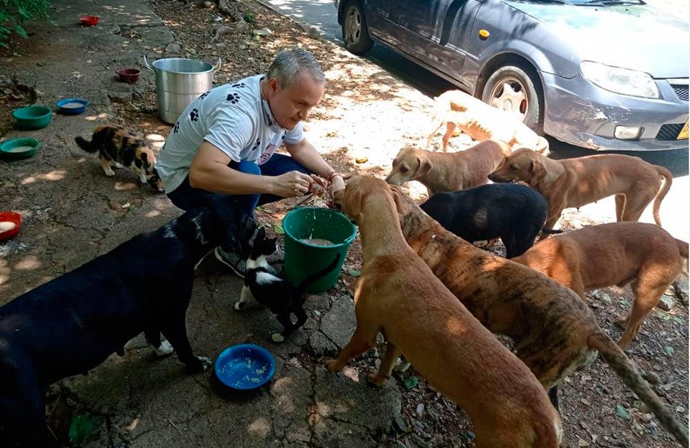Aprobado proyecto para salvaguardar a animales maltratados y abandonados