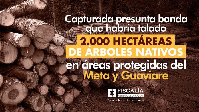 Capturada presunta banda que habría talado 2.000 hectáreas de árboles nativos en áreas protegidas del Meta y Guaviare