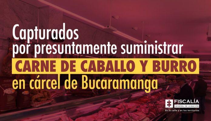 Capturados por presuntamente suministrar carne de caballo y burro en cárcel de Bucaramanga