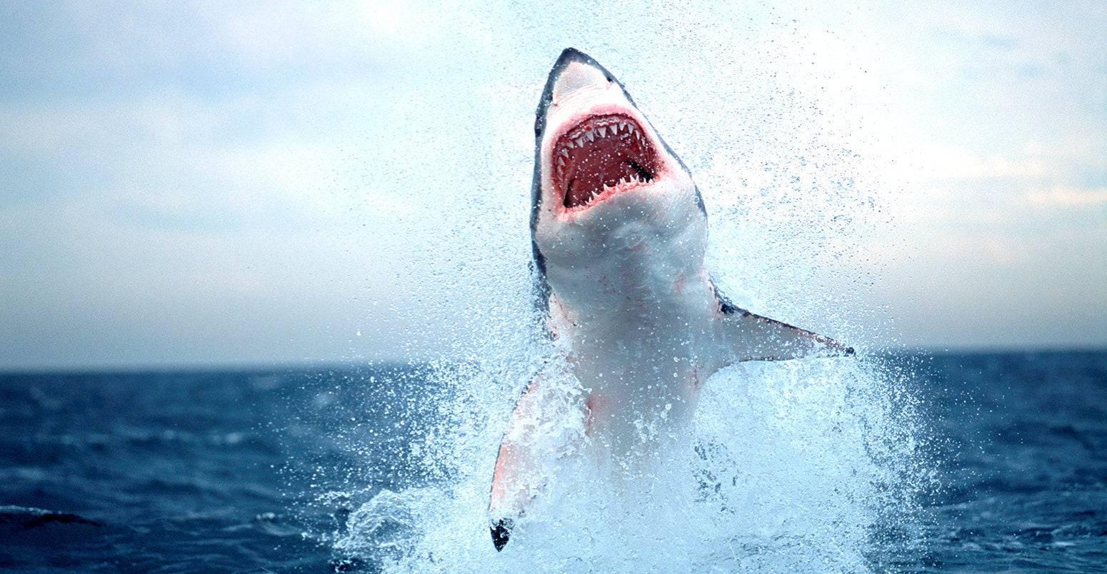 Curiosa similitud entre intestinos de tiburón y una válvula que Nikola Tesla
