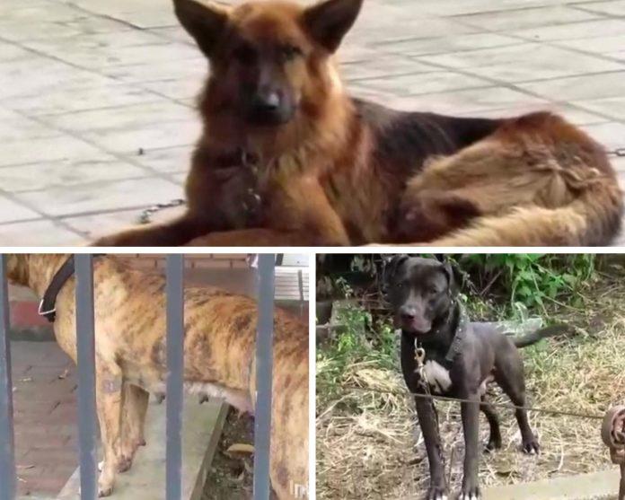abuso animal en