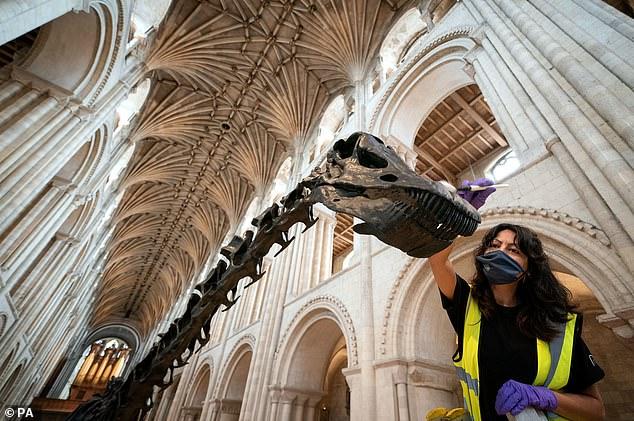 La catedral de Norwich es la octava y última parada de la gira de Dippy y debía realizarse en el verano de 2020, pero fue reprogramada debido a la pandemia de coronavirus.