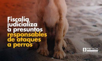 Fiscalía judicializa a presuntos responsables de ataques a perros