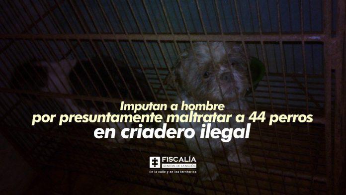 Imputan a hombre por presuntamente maltratar a 44 perros en criadero ilegal
