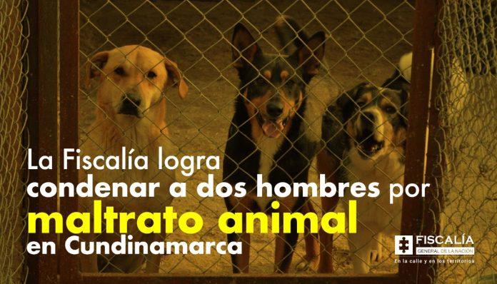 La Fiscalía logra condenar a dos hombres por maltrato animal en Cundinamarca