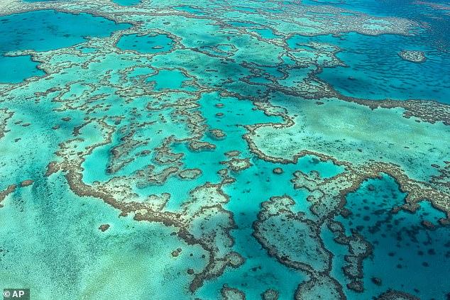 El Comité del Patrimonio Mundial de la UNESCO anunció el viernes que no incluirá a la Gran Barrera de Coral como en peligro de extinción luego de dos días de deliberaciones que dejaron a los australianos conteniendo la respiración por temor a que una nueva clasificación pudiera dañar la imagen de la maravilla natural.
