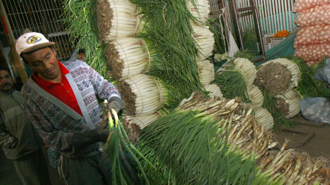 Más de 5 mil cebolleros en crisis económica desde hace 3 meses en Boyacá - Noticias de Colombia