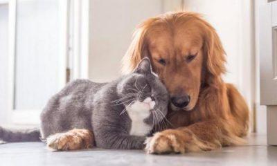 Requisitos nuevos para entrada y salida de Colombia de perros y gatos   Gobierno   Economía