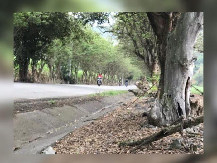 Ardillas, conejos y zorros son aplastados en La Buitrera, Palmira;  solicite instalar reductores de velocidad