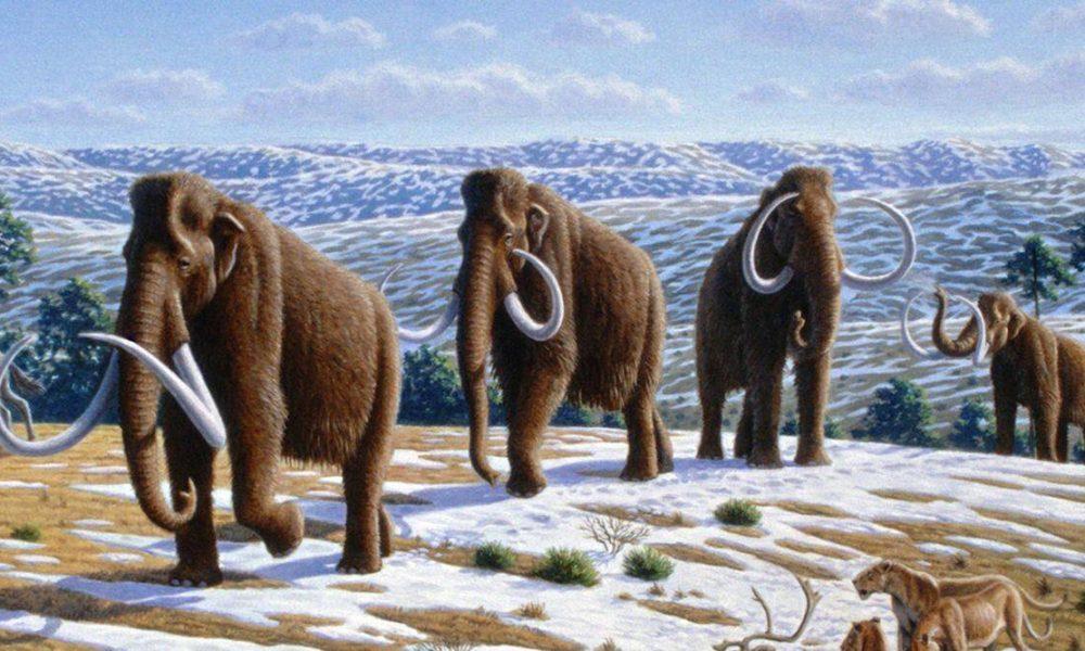 Mammoth lifetime