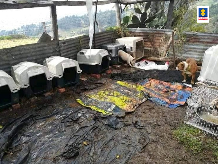 Fiscalía imputó a dueña de fundación que habría albergado perros en pésimas condiciones - Noticias de Colombia