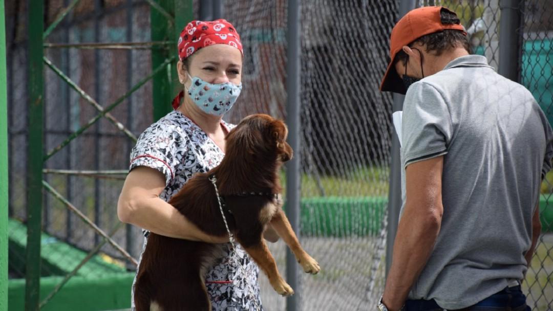 Jornadas gratuitas de atención animal en los municipios de Caldas - Noticias de Colombia