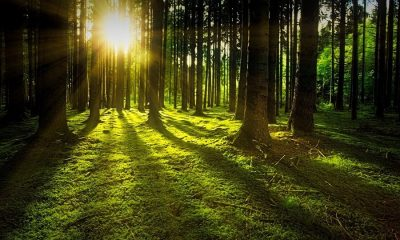 La influencia de los bosques en la temperatura de la Tierra