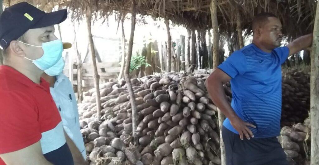 Toneladas de ñame represadas en Moñitos se ofertarán durante una semana en Montería - Noticias de Colombia