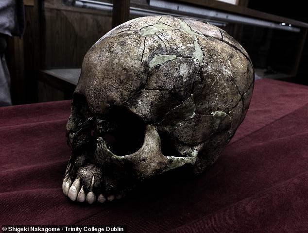 Las poblaciones japonesas modernas descienden de tres culturas antiguas, en lugar de solo dos, como se pensaba anteriormente, ha determinado un nuevo análisis genético.  En la imagen: uno de los antiguos cráneos japoneses del que se extrajo el ADN