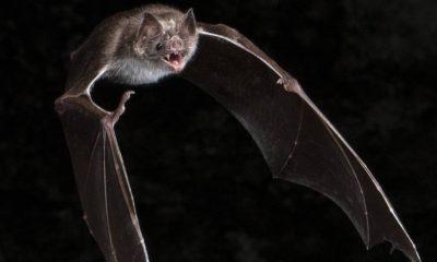 Bat study