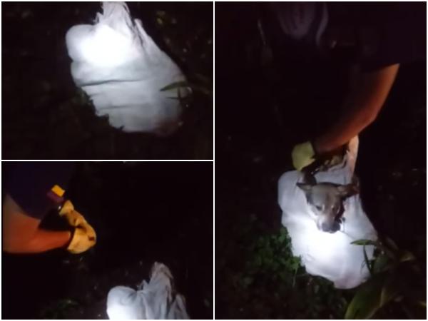 Creían eran restos humanos pero resultó ser un perrito, lo metieron en un costal y tiraron al monte, en Timbío - Noticias de Colombia