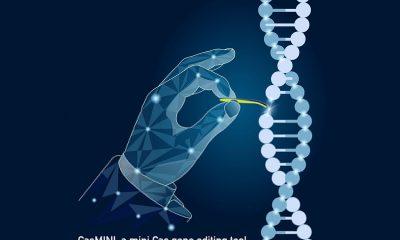 Desarrollan pequeño sistema de edición del genoma CRISPR