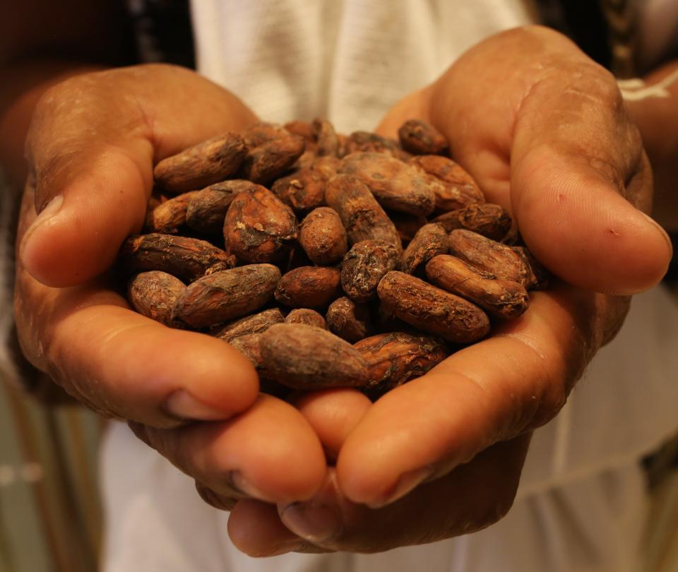 El cambio climático podría acabar con el cacao, café y la soya | Economía
