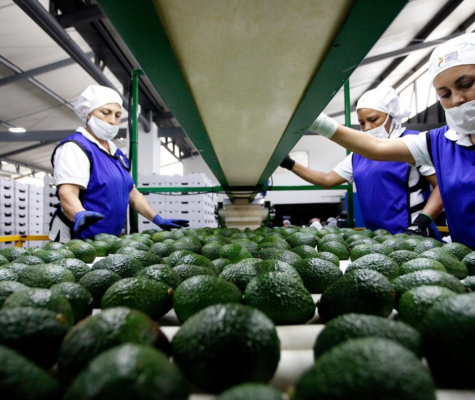 El país quiere mejorar el TLC con EE.UU. y potenciar el agro   Economía