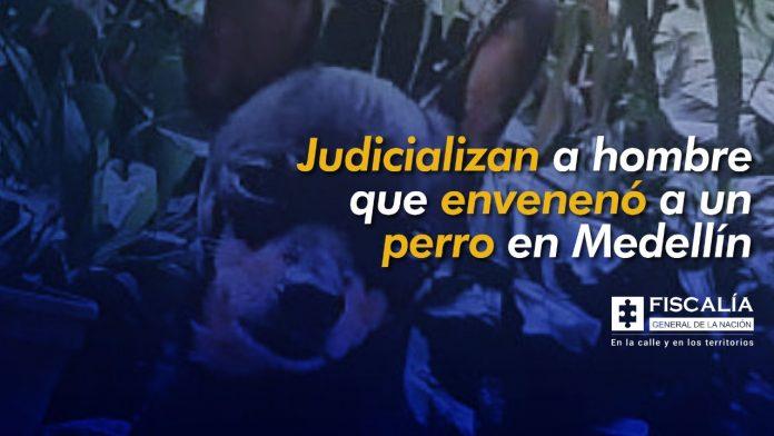 Judicializan a hombre que envenenó a un perro en Medellín - Noticias de Colombia