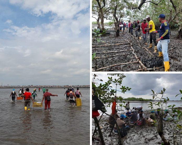 guardianes del manglar Tumaco
