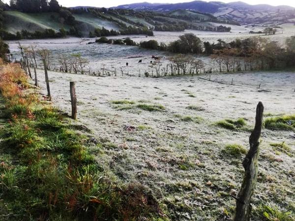 Otro 'golpe' al agro: heladas destruyeron cultivos de cinco municipios de Nariño