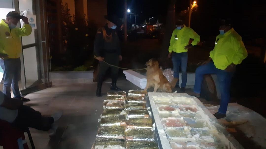 Perrita descubrió caleta de marihuana que iba a ingresar a Santander - Noticias de Colombia