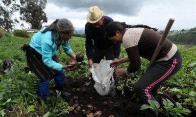 Pobreza multidimensional: hogares del campo los más golpeados de Colombia | Finanzas | Economía