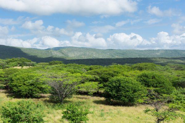 Por cada hectárea minera, Cerrejón cuenta con 1,8 hectareas de bosque.