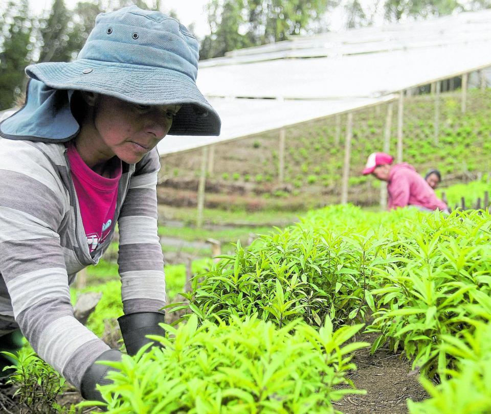 Renovar normas, la clave para mantener exportación del agro | Economía