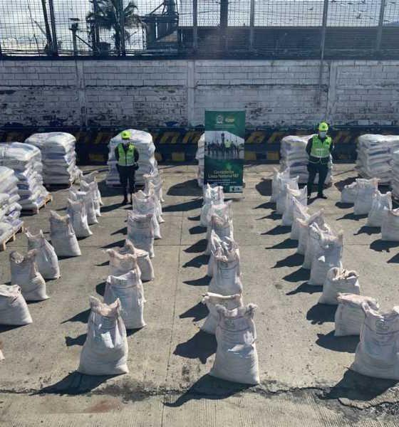 Incautados en Buenaventura 2,1 toneladas de alcaloide oculto en bultos de abono mineral