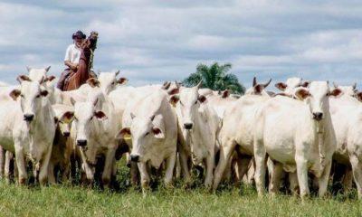 ¡ÚLTIMA HORA! Comunicado a los ganaderos de Arauca - Noticias de Colombia