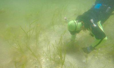 nutria de mar