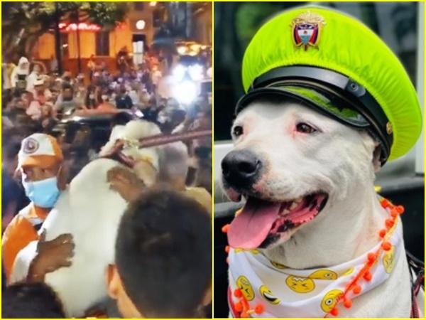 Con celebración recibieron a 'Beethoven', el perro perdido en el que apareció en el Valle del Cauca