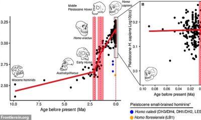 Investigadores estadounidenses analizaron 985 cerebros humanos fosilizados y modernos y observaron un aumento de tamaño hace 2,1 millones de años y nuevamente hace 1,5 millones de años, pero se identificó una disminución durante la era del Holoceno.