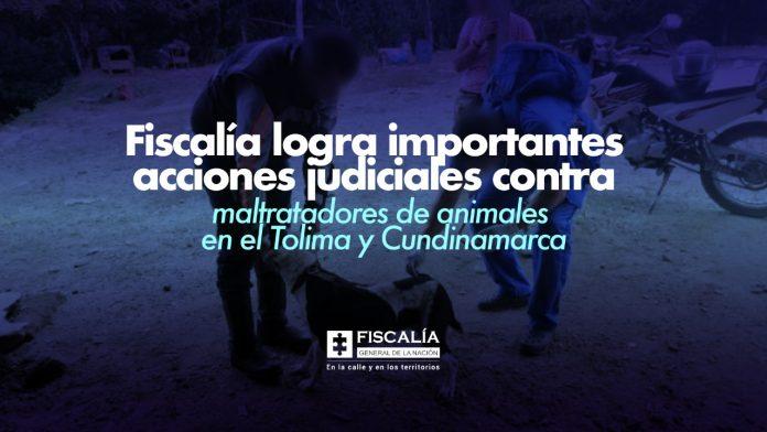 Fiscalía logra importantes acciones judiciales contra maltratadores de animales en el Tolima y Cundinamarca - Noticias de Colombia
