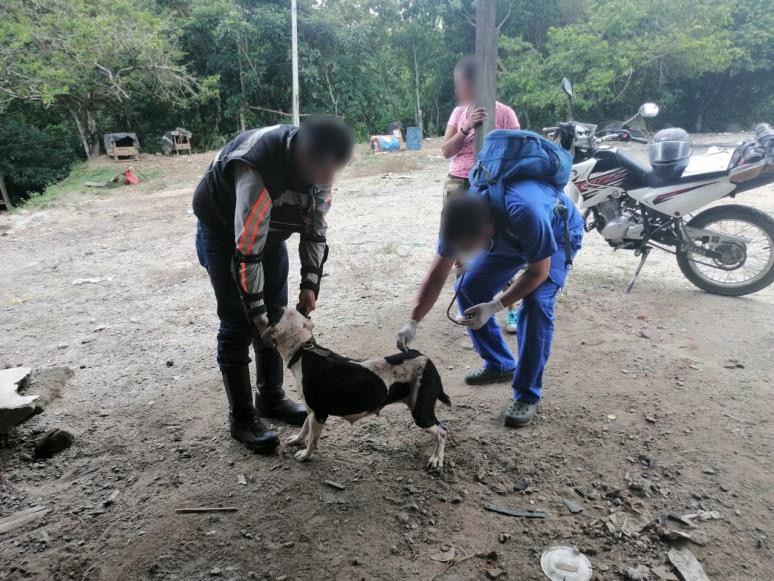Fiscalía logra importantes acciones judiciales contra un hombre que mantenía perros en pésimas condiciones en Ibagué - Noticias de Colombia