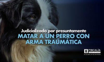 Judicializado por presuntamente matar a un perro con arma traumática - Noticias de Colombia