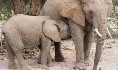 baby mom elephant