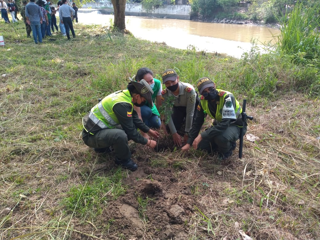 Sembratón en el Día Mundial del Árbol para resaltar la importancia de los bosques - Noticias de Colombia
